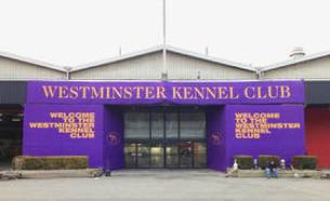 Welcome to the Westminster Kennel Club